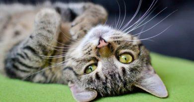 Il carattere del gatto? Dipende dal suo padrone