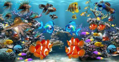 Acquariofilia: i 7 pesci per chi è alle prime armi