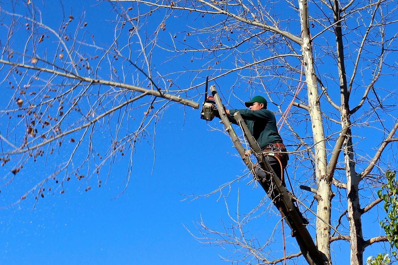 Come effettuare l'abbattimento alberi in modo ottimale e rispettando le disposizioni vigenti